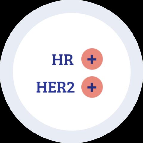 Icon zu Hormonrezeptor positiv HER2 positiv